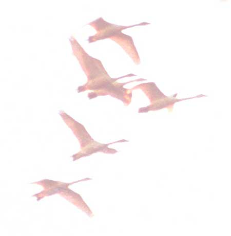 Flightcrop
