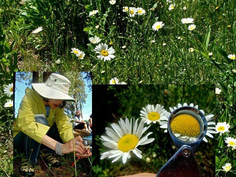 Prática de estudo da planta durante o curso na Terra Flora, Califórnia 2008 - foto Patricia Gebara