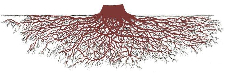As Redwoods são as árvores mais altas do mundo e no entanto, suas raízes não são proporcionalmente tão profundas. Os bosques dessas árvores são estáveis  e resistem aos ventos e ás tempestades porque elas se ampara umas ás outras entrelaçando fortemente as suas raízes